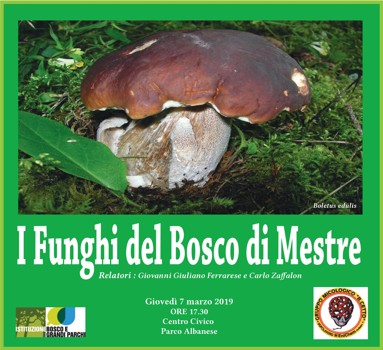 Immagine locandina i funghi di Mestre