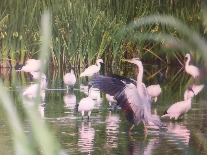 uccelli al parco San Giuliano