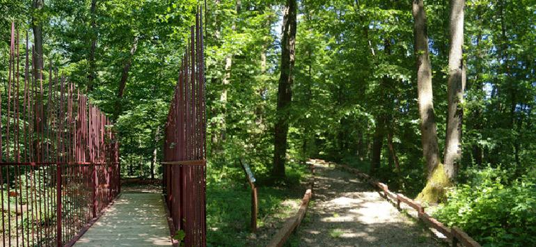 il bosco di Carpenedo