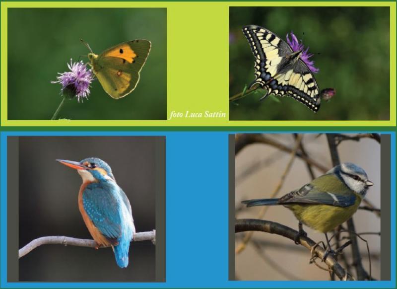 uccelli e farfalle