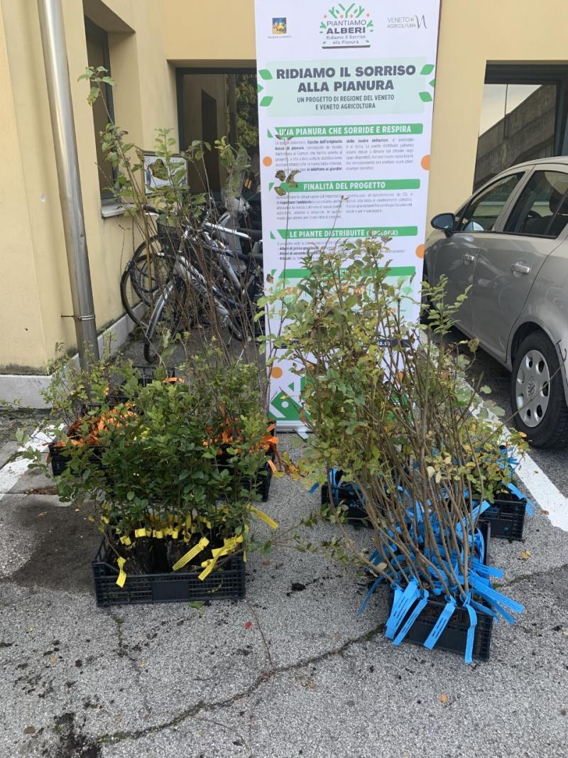 piante distribuite