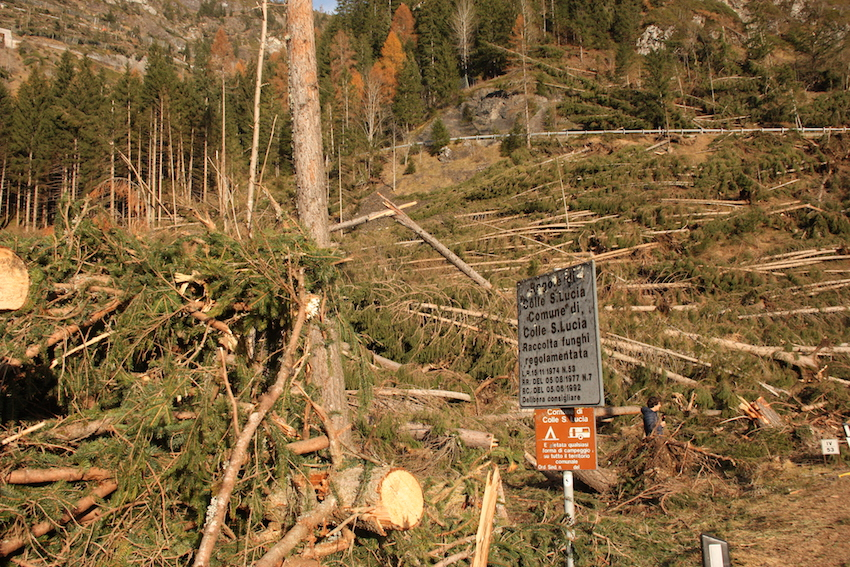 alberi abbattuti