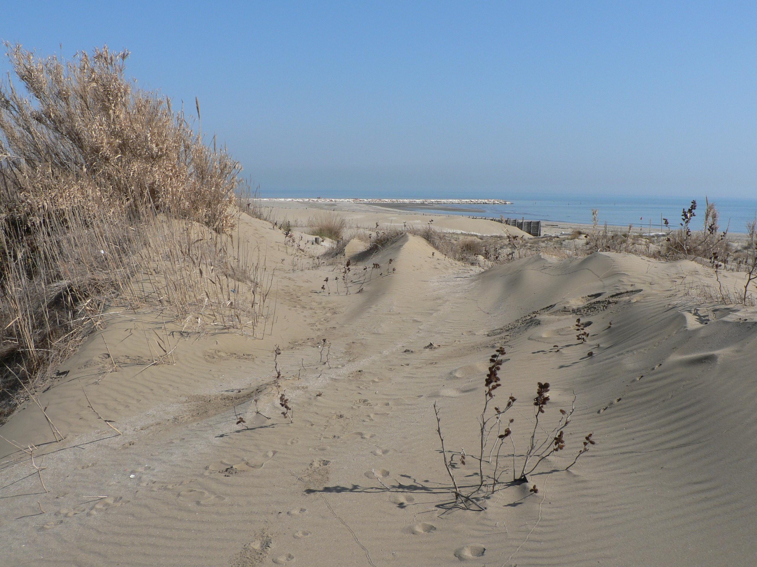 immagine dune della spiaggia Alberoni