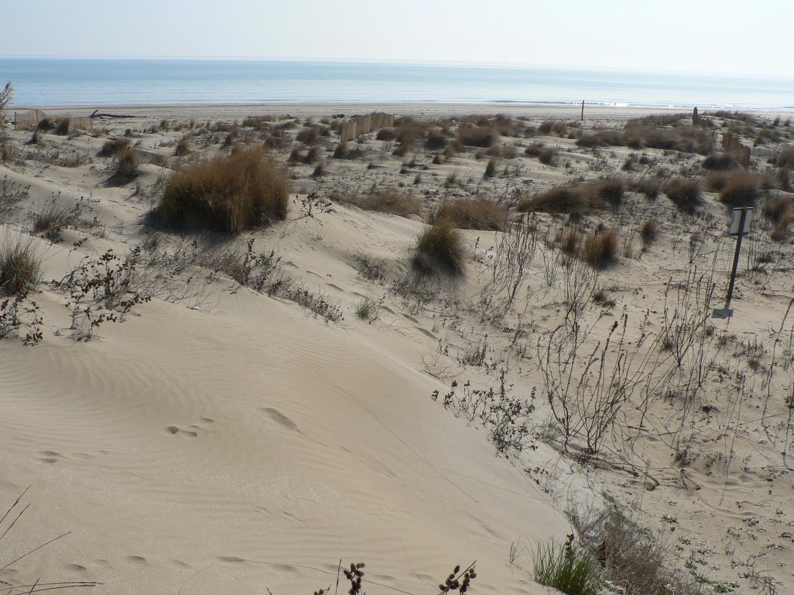 immagine delle dune Alberoni