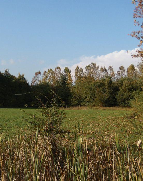 Bosco di Carpenedo