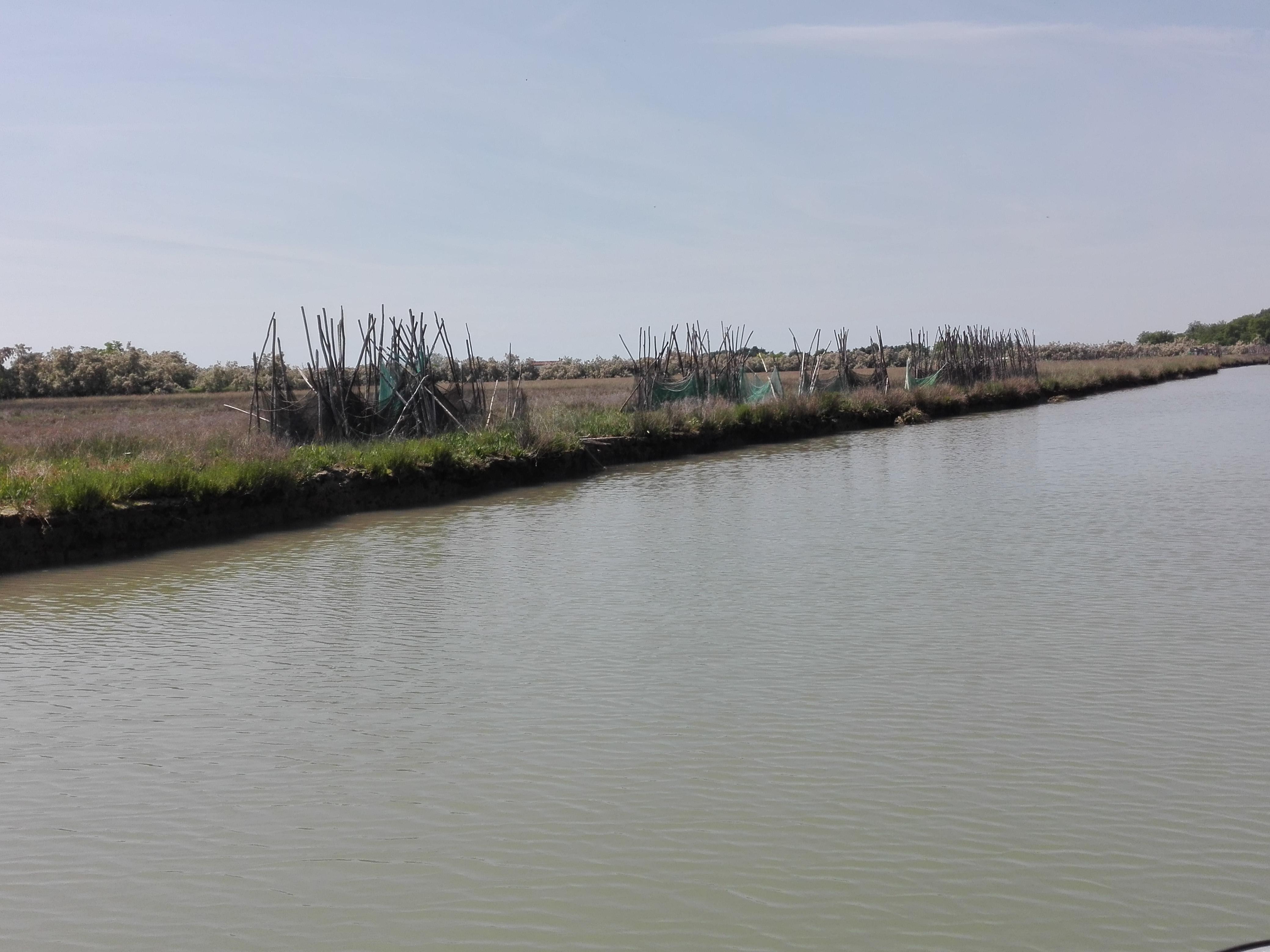 Progetto LIFE VIMINE barene della laguna di Venezia