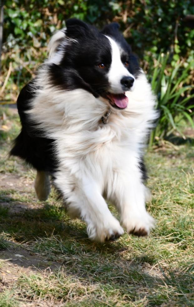 Da fine settembre un corso gratuito per i proprietari di - Colorazione immagine di un cane ...