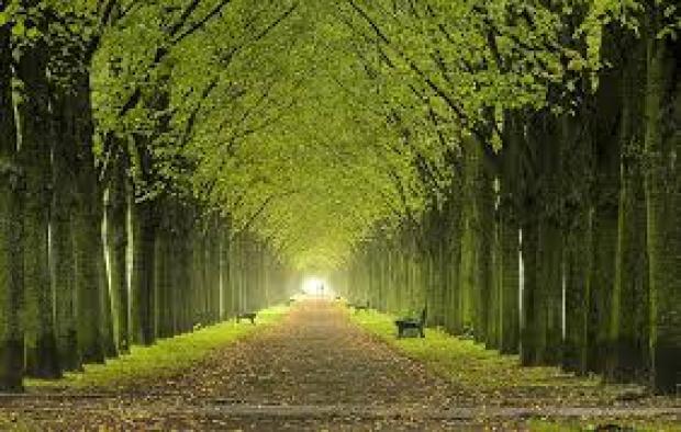 Alberi immagini e racconti in due serate alla vez for Pianta della foresta di pioppo